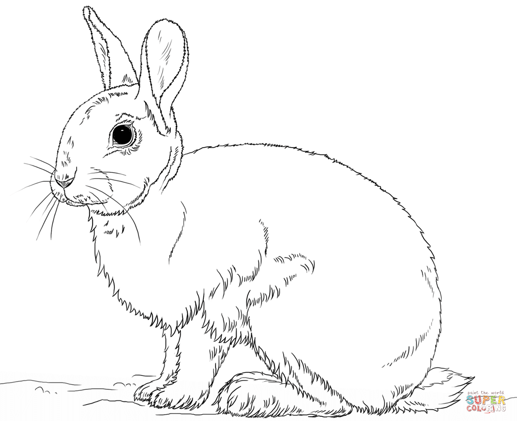 1012x830 Cute Bunny Rabbit Coloring Page Free Printable Coloring Pages