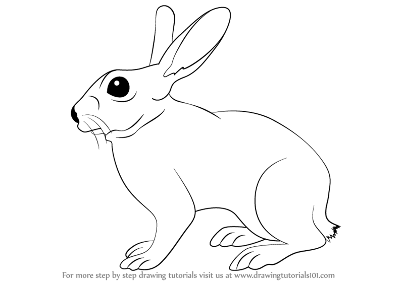 800x564 Learn How To Draw A Rabbit (Farm Animals) Step By Step Drawing