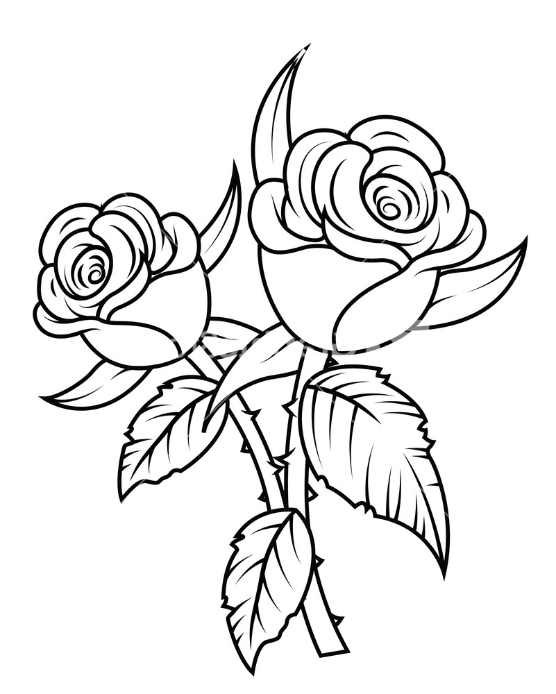 Black and white rose drawing at getdrawings free for personal 801x1000 rose flower black and white drawing black and white drawings of mightylinksfo