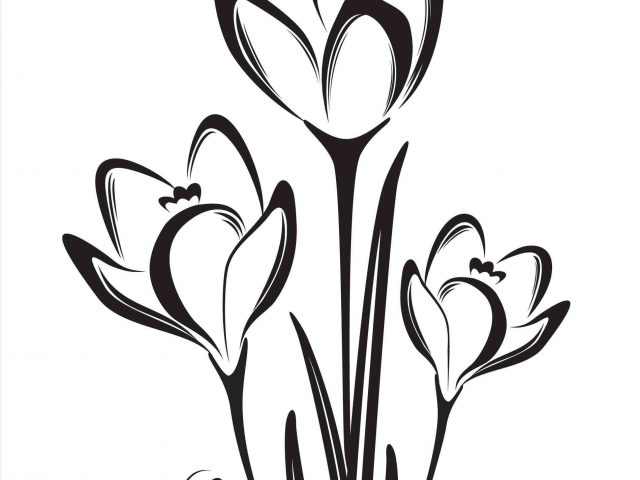 640x480 The Images Collection Of Drawing Ideas Of S Tulips Branches Pencil