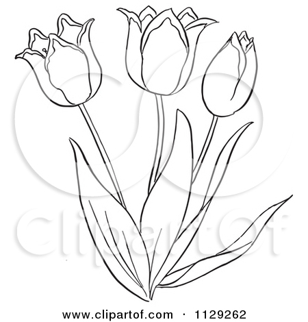 450x470 Cartoon Clipart Of An Outlined Tulip Flower Plant