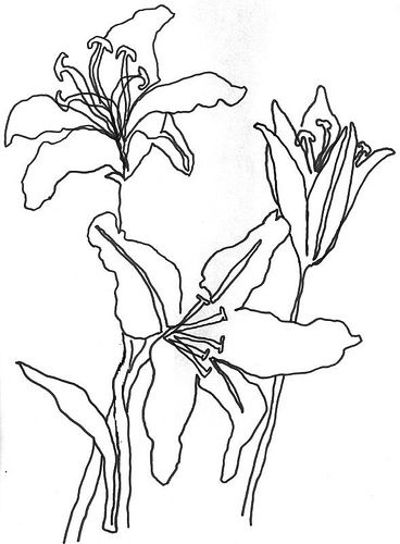 368x500 Drawn Tulip Contour Drawing