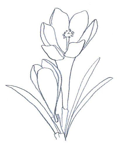 408x510 Flower Sketches