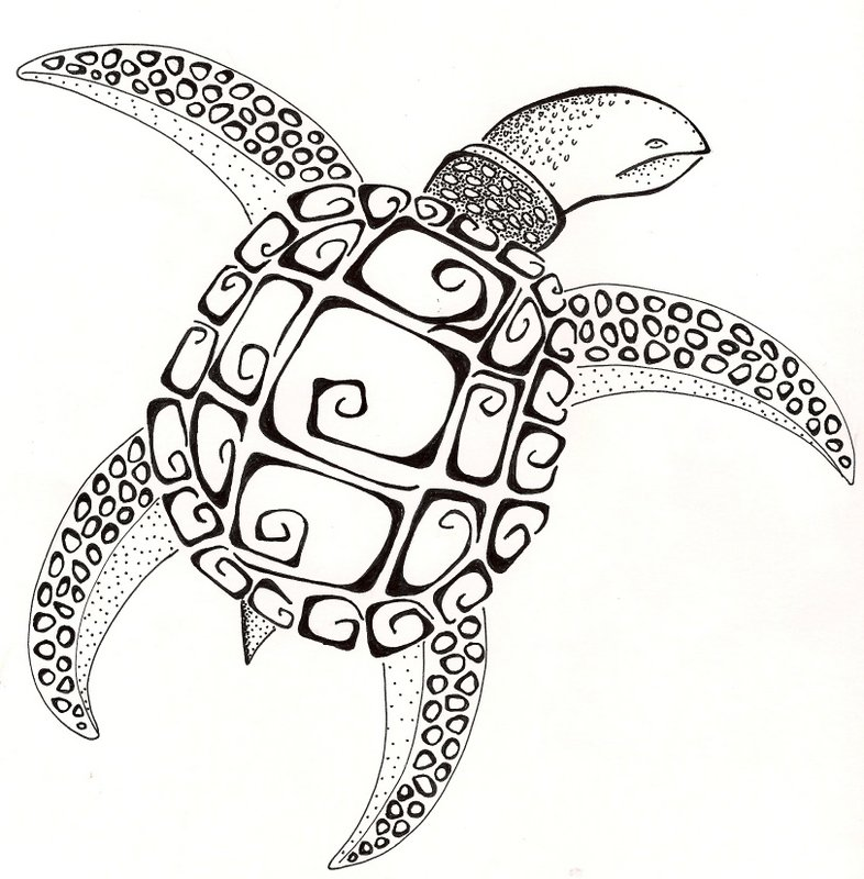 786x800 Sea Turtle Original Drawing Black And White Ginaleecincotta@gmail