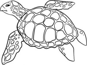 302x228 How To Draw A Sea Turtle Step 5 Art With Turtles