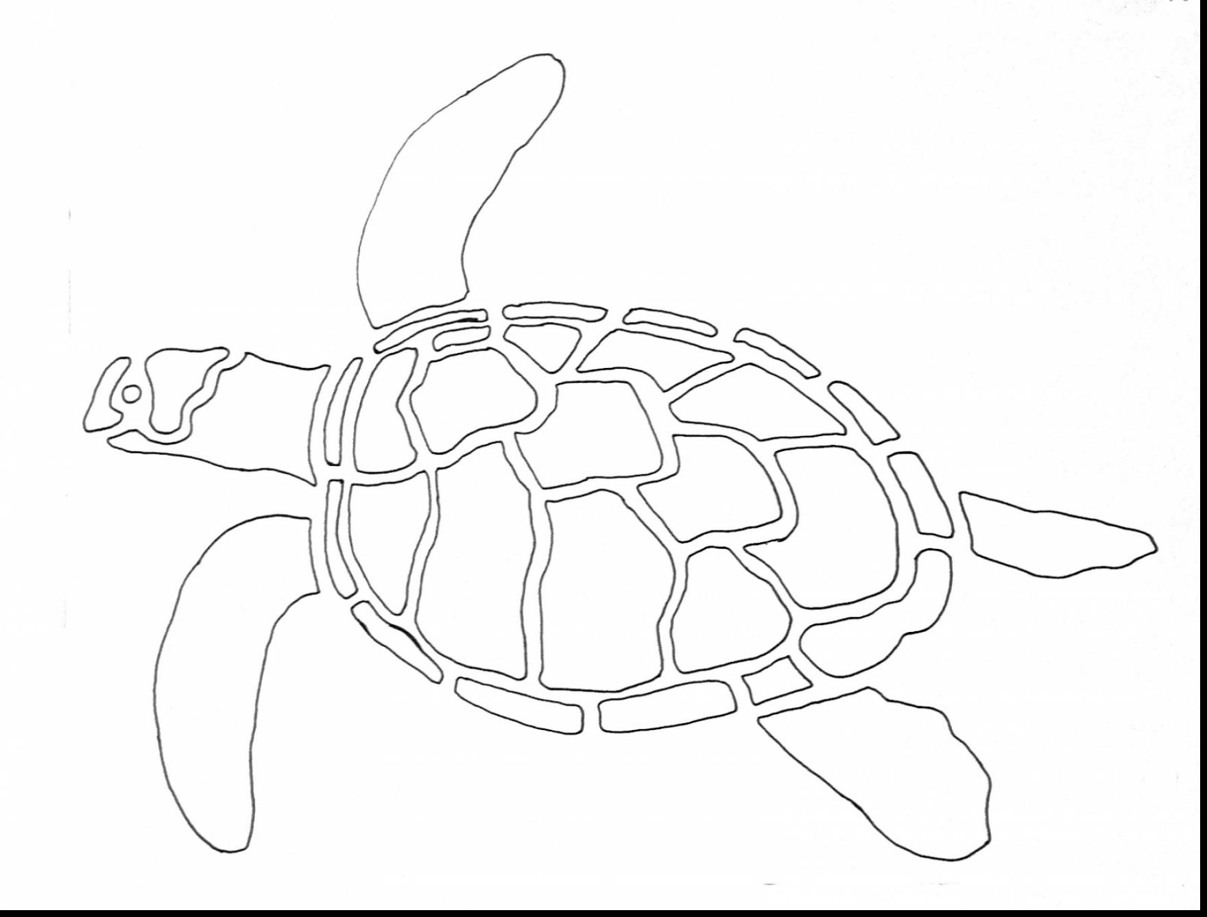 1760x1338 Remarkable Sea Turtle Drawing With Sea Turtle Coloring Page