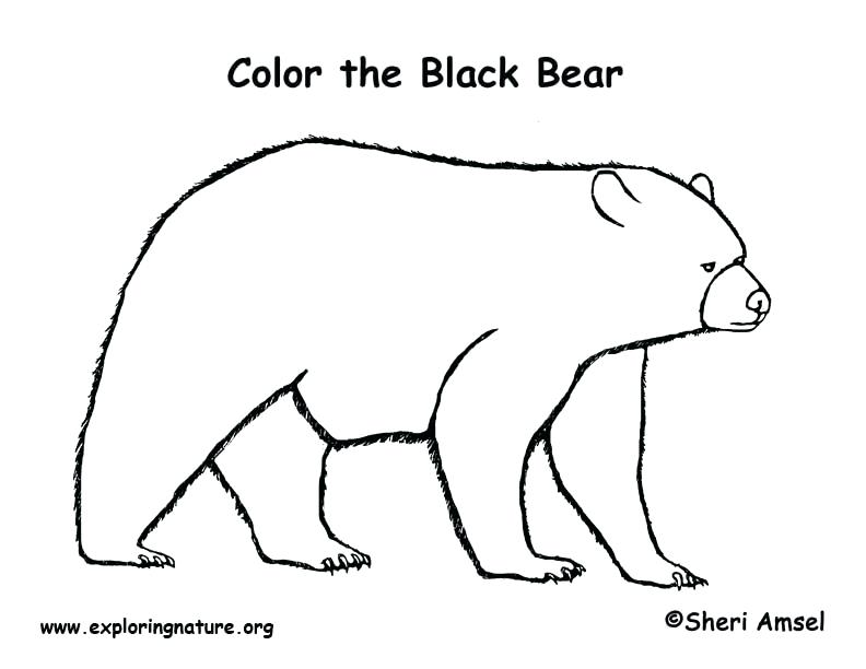 792x612 Black Bear Coloring Page Standing Black Bear Drawing Black Bear