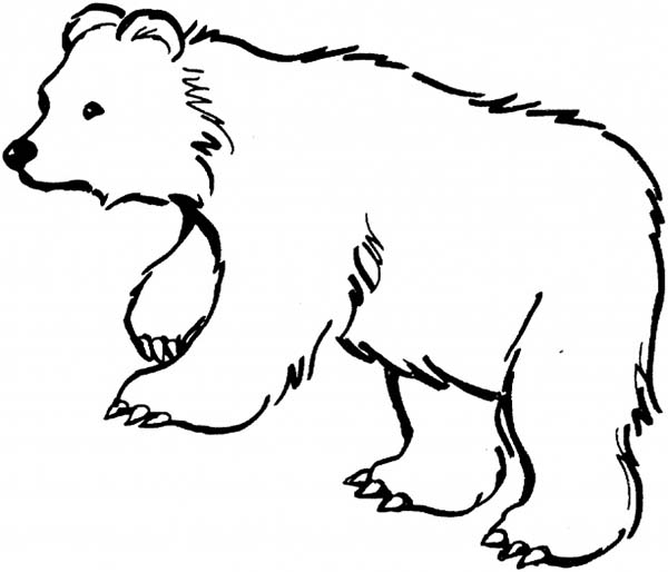 600x514 Black Bear Is Hungry Coloring Page