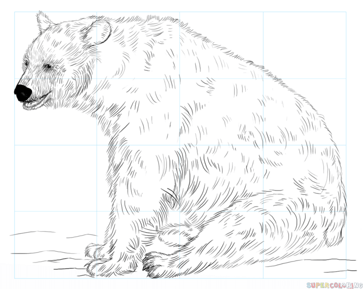 722x575 How To Draw A Black Bear Step By Step Drawing Tutorials