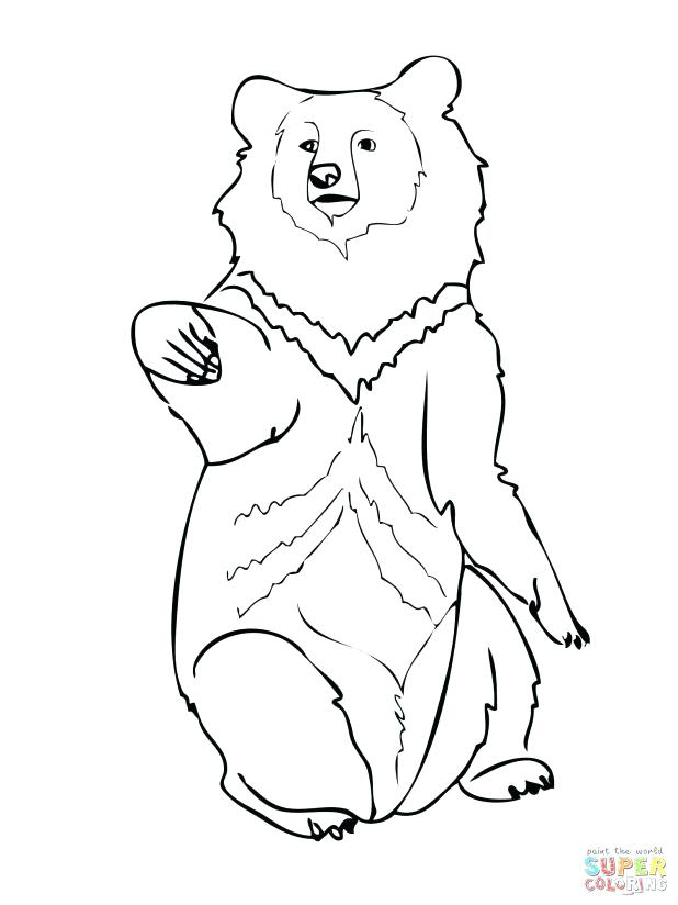 618x824 Black Bear Coloring Pages Coloring Trend Medium Size Bear Black