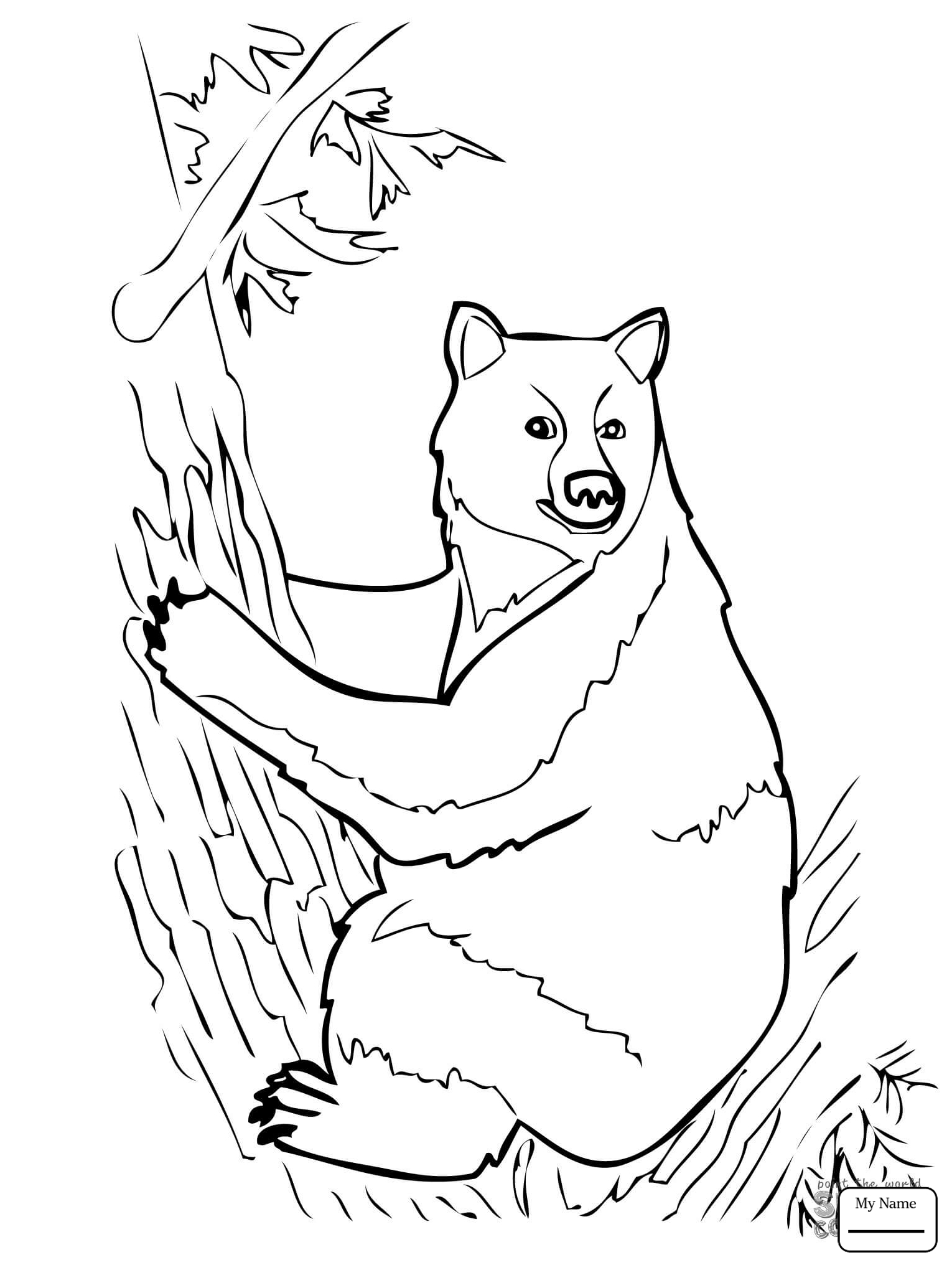 1530x2040 American Black Bears American Black Bear Sits On Tree Mammals