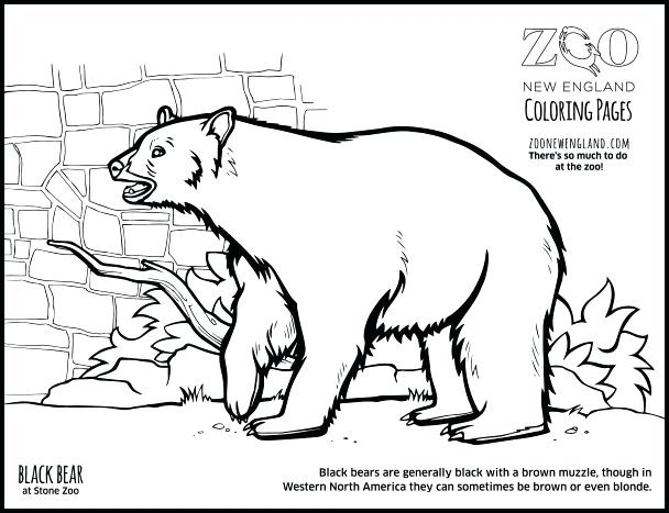 608x467 Black Bear Coloring Pages Coloring Pages Color A Bear Black Bear