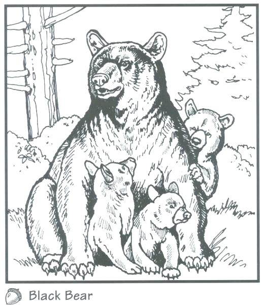 520x602 Black Bear Coloring Pages Free Printable For Kids Pictures