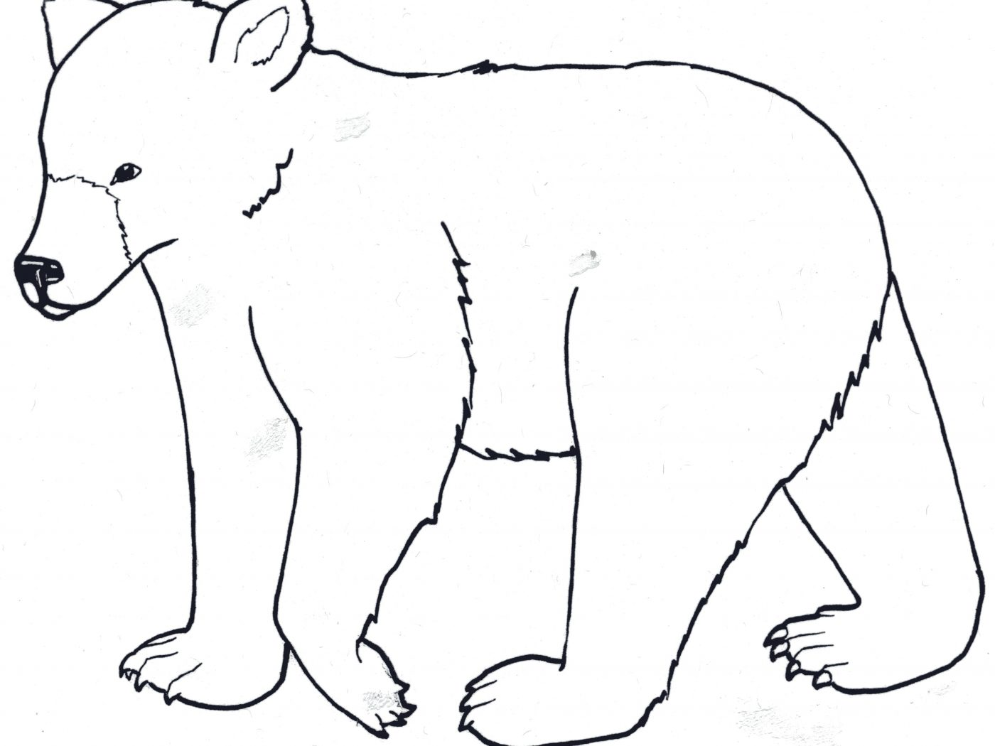 1400x1050 Free Black Bear Adult And Son Coloring Pages Printable Animals