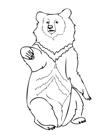 360x480 Asia Black Bear Coloring Page Free Printable Pages