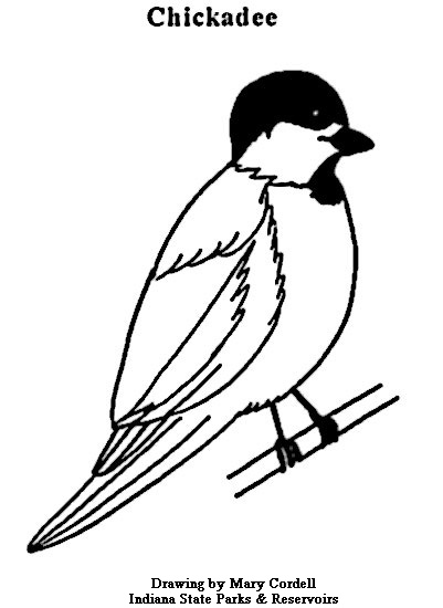 Black Capped Chickadee Drawing at GetDrawingscom Free for