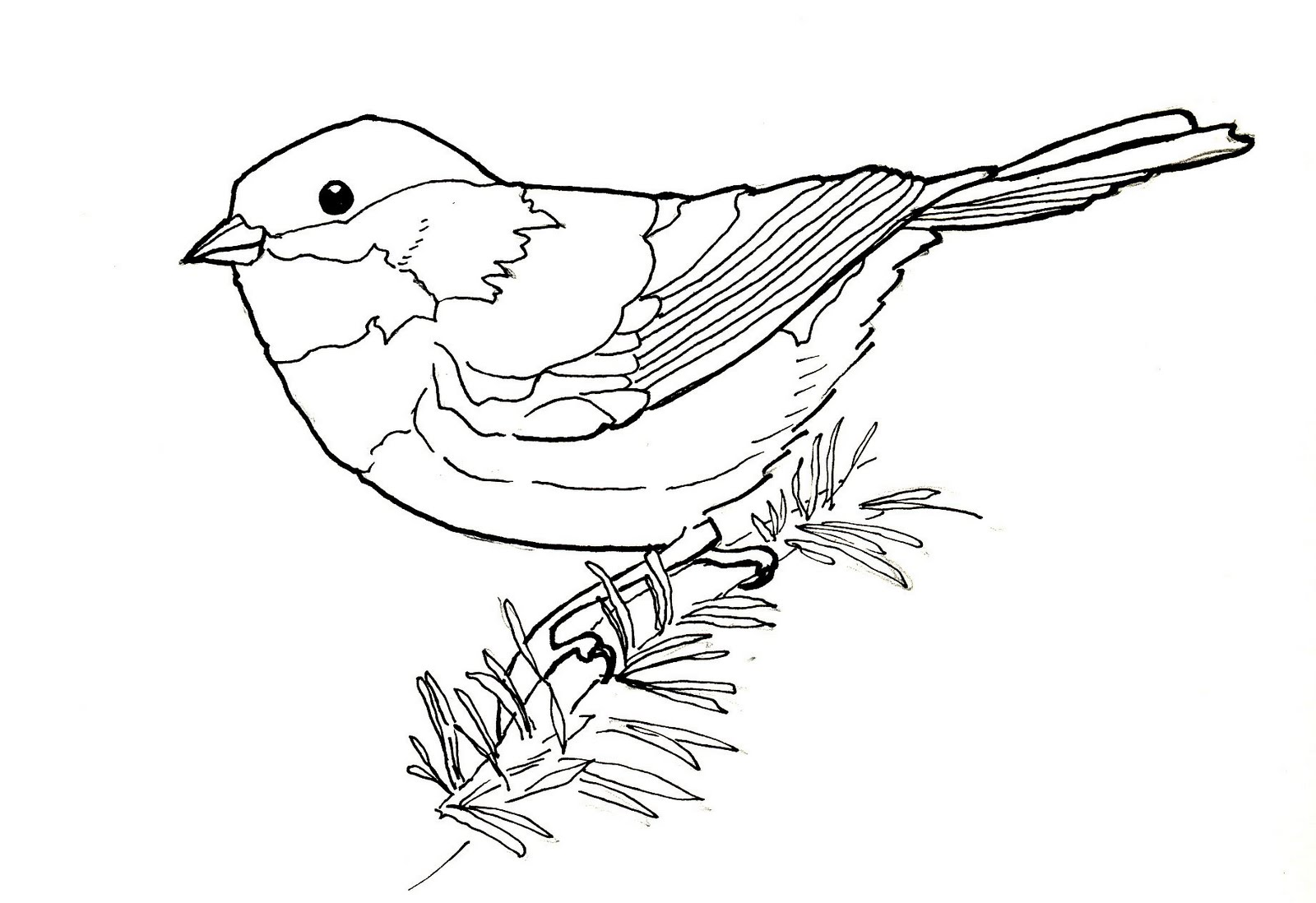 Cute Chickadee Coloring Page Photos - Entry Level Resume Templates ...