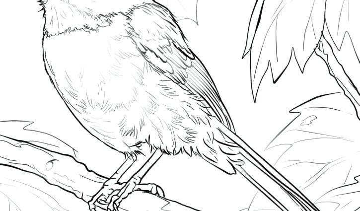 725x425 Black Capped Chickadee Coloring Page Meadowlark And Goldenrod