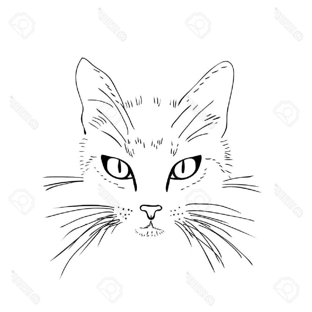 1024x1024 Best Cat Face Black And White Sketch Vector Illustration Stock
