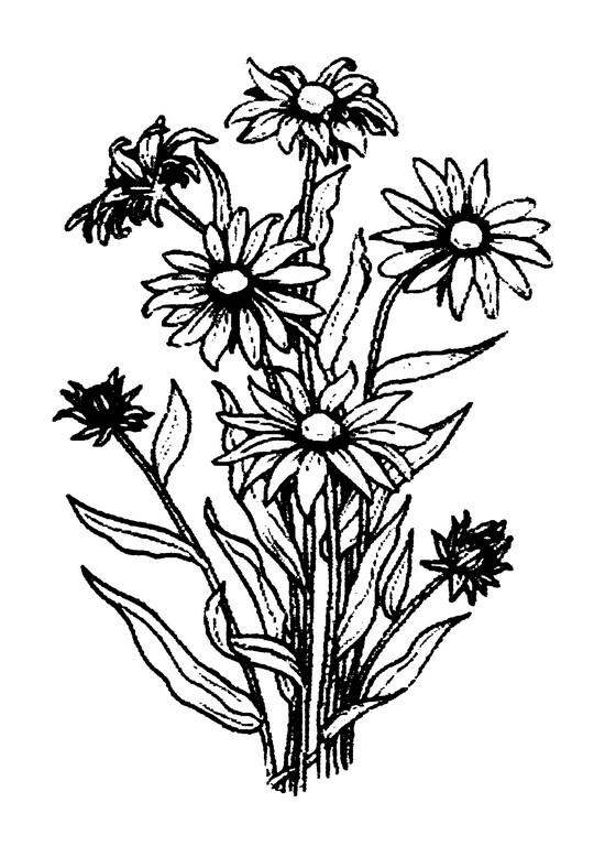 550x768 Black Eyed Susan Anthony's Paper Craft