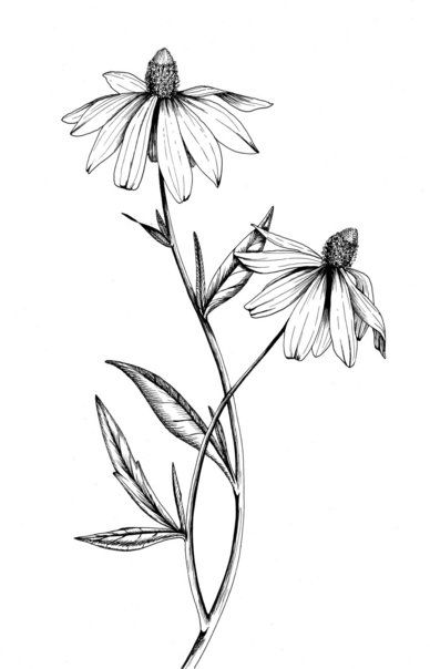 388x604 Botanical Illustrations By Meghan Witzke