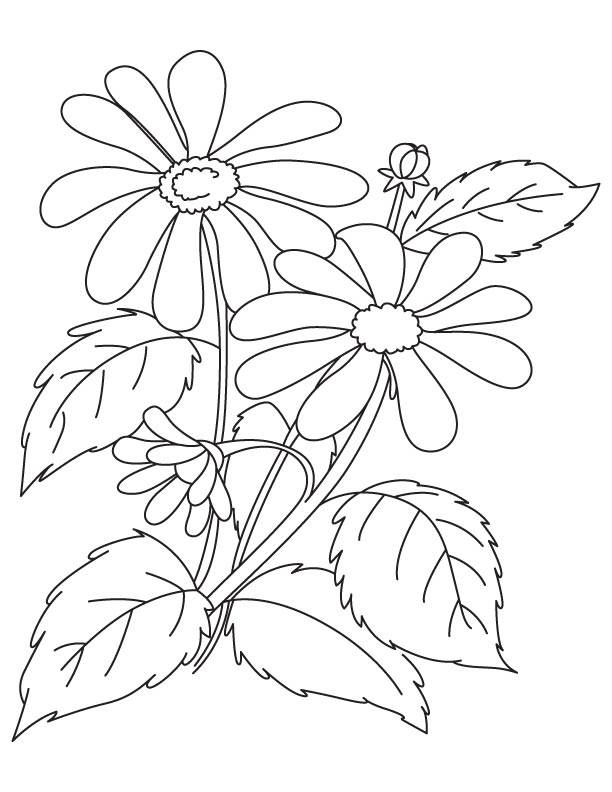 612x792 Brown Eyed Susan Coloring Page Download Free Brown Eyed Susan