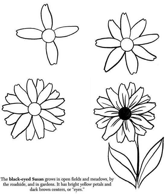 547x640 How To Draw Flowers Black Eyed Susan Black Eyed Susan, Black