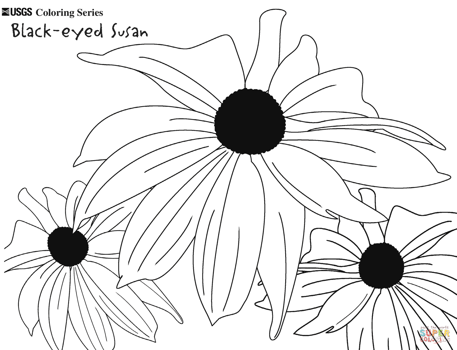 1455x1114 Image Result For Colouring Pages For Black Eyed Susan Flowers