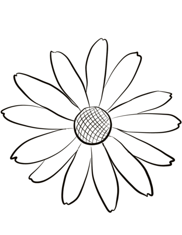 371x480 Black Eyed Susan Coloring Page Free Printable Coloring Pages
