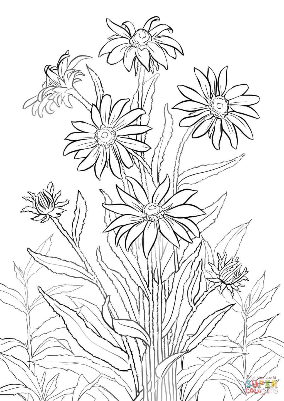 1020x1440 Black Eyed Susan Super Coloring Drawing Flowers Tutorials