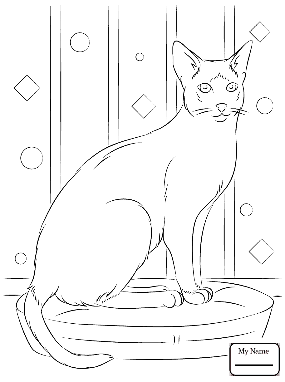 913x1224 Mammals Recent Black Footed Ferret Recent Coloring Pages For Kids