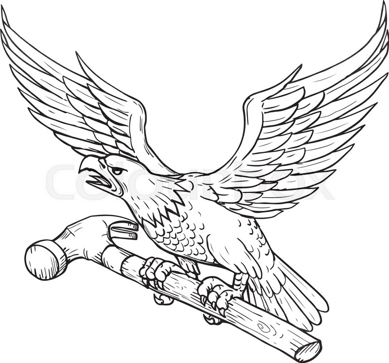 800x747 Drawing Sketch Style Illustration Of An American Bald Eagle