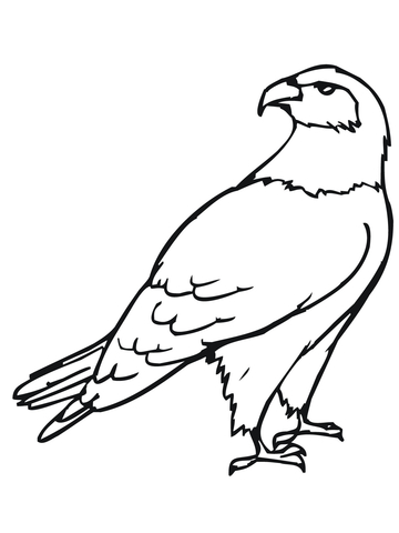 360x480 Hawk Bird Coloring Page Free Printable Coloring Pages