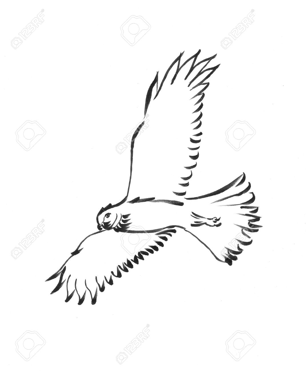 1071x1300 Image Result For Hawk Drawing Drawing Inspiration