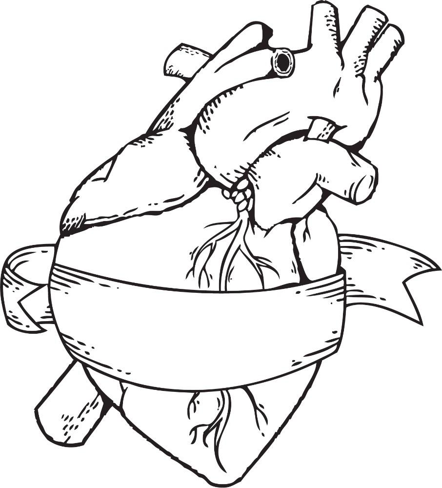 906x1000 A Real Heart Drawing Real Heart Drawing Clipart Panda