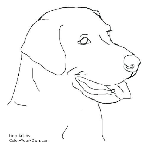 500x500 Breakthrough Black Lab Coloring Pages Free