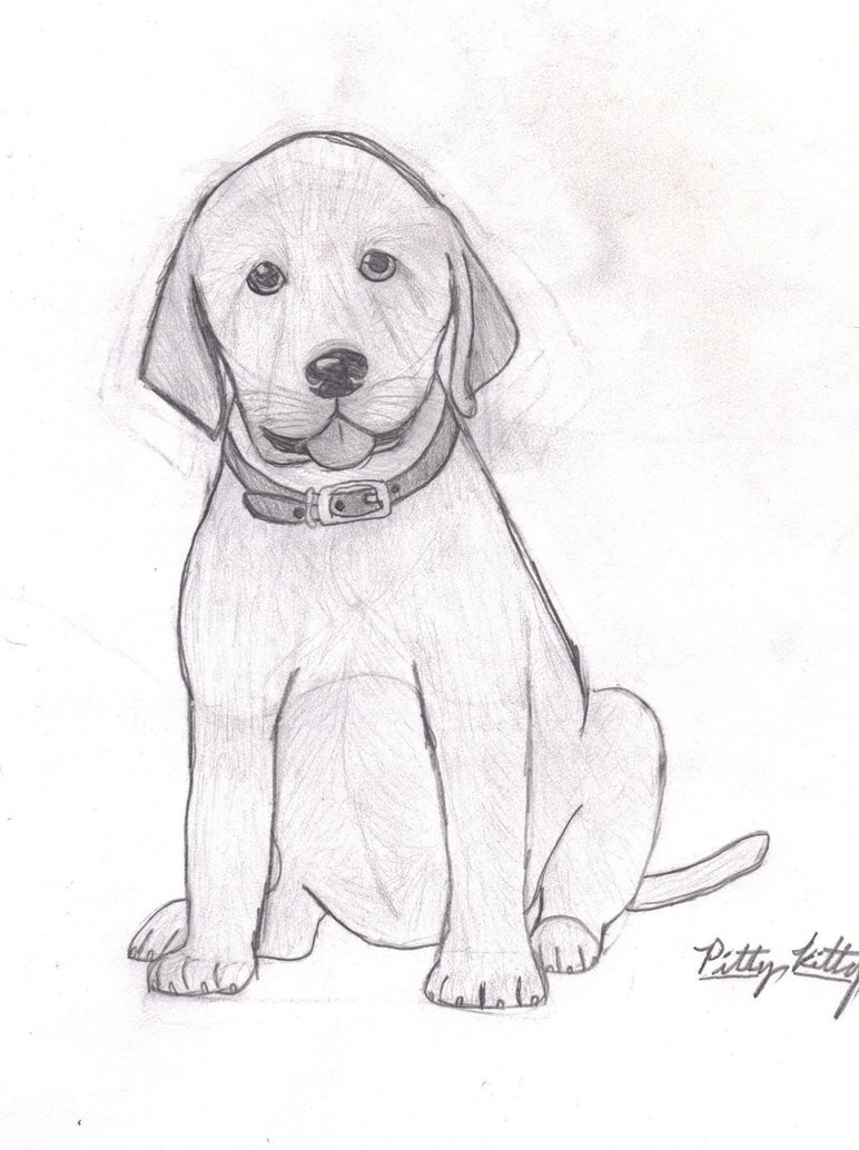 772x1034 Lab Puppy By Pity Kitty