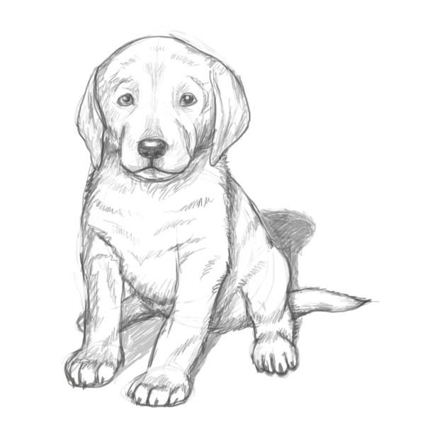 600x600 Realistic Lab Dog Coloring Pages Color Bros