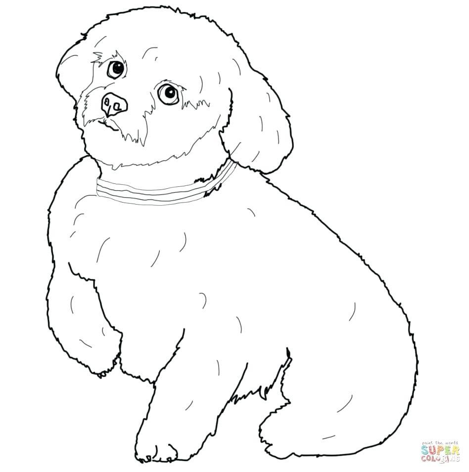 948x955 Coloring Poodle Coloring Pages Fresh Black Lab. Poodle Coloring Pages