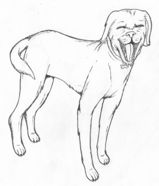 320x374 Labrador Drawings On Paigeeworld. Pictures Of Labrador