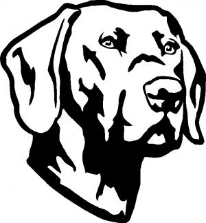 300x324 Labrador Retriever Car Or Truck Window Decal Sticker