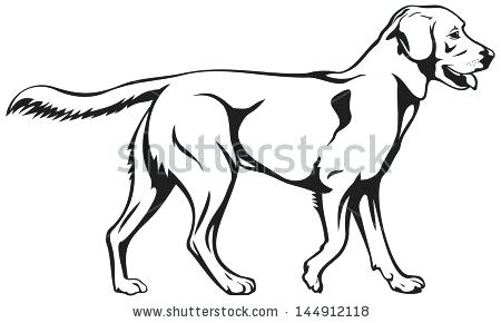 450x290 Labrador Retriever Coloring Pages Back To The Coloring Pages Index