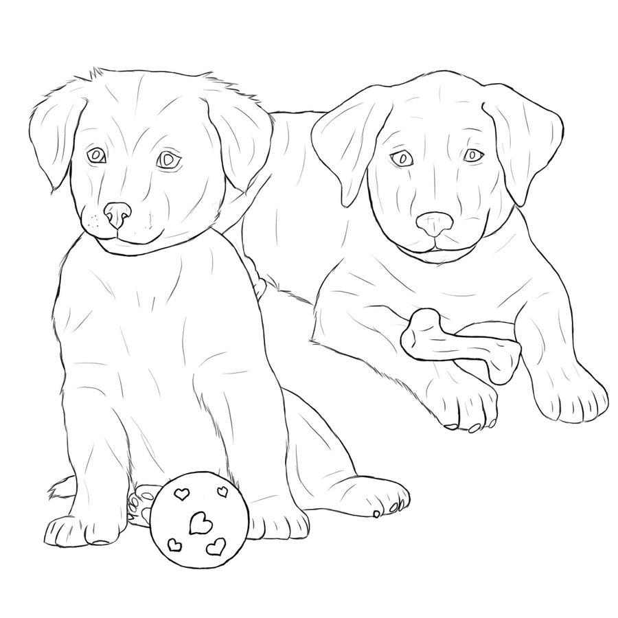 900x900 Labrador Retriever Puppies By Midnightfoal