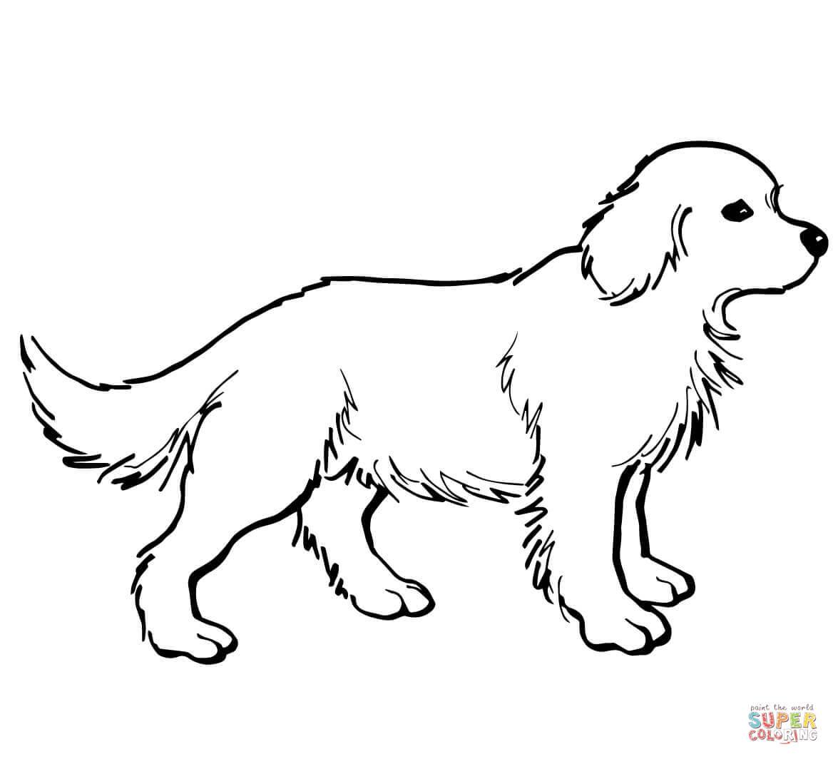 1168x1064 Labrador Retriever Coloring Page Free Printable Coloring Pages