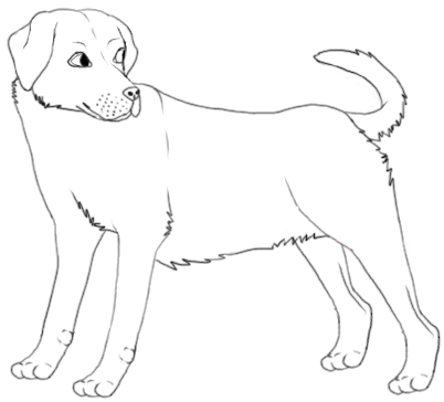 402x364 Labrador Lineart By Icibubble