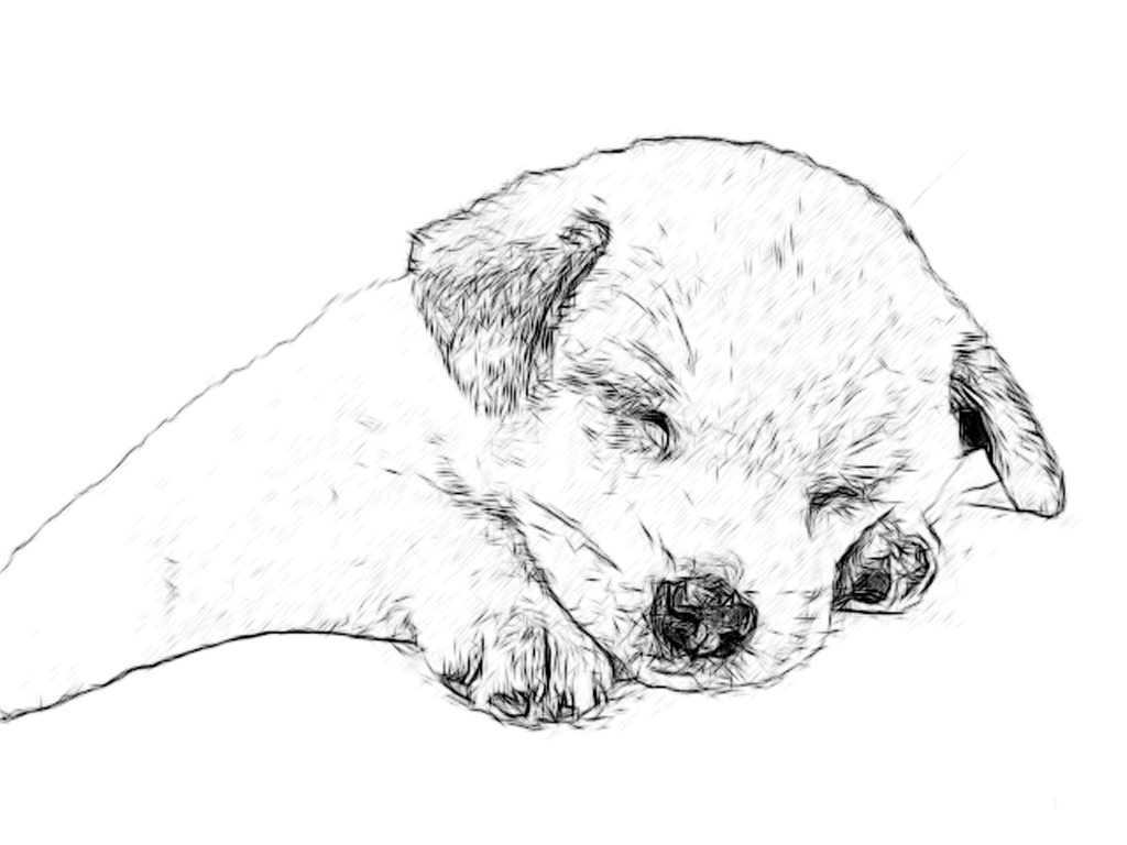 1024x768 Line Drawing Pencil And Charcoal Art Galleries Labrador Retriever