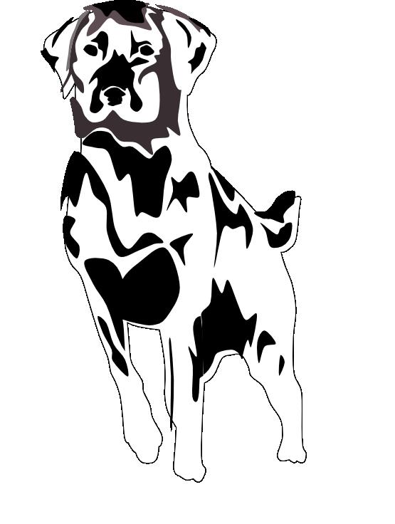 555x736 Clip Art Black Lab Black White Line Art Svg
