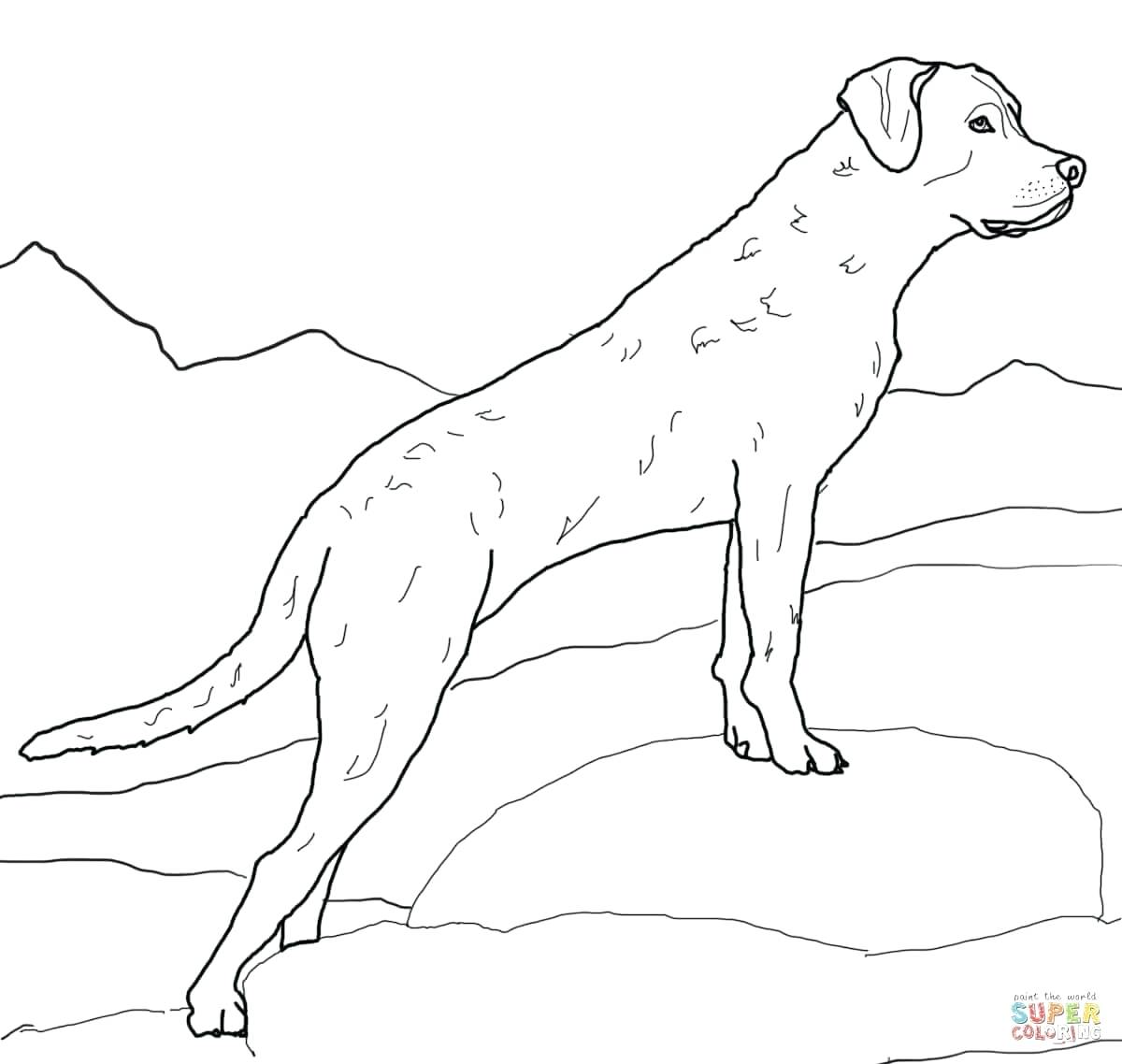 Black Lab Line Drawing at GetDrawings.com | Free for personal use ...