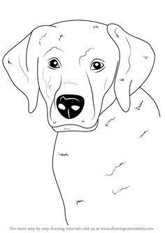 236x333 Line Drawing Of Labrador Retriever