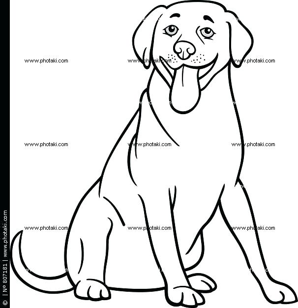 606x626 Labrador Retriever Coloring Pages Retriever Coloring Pages